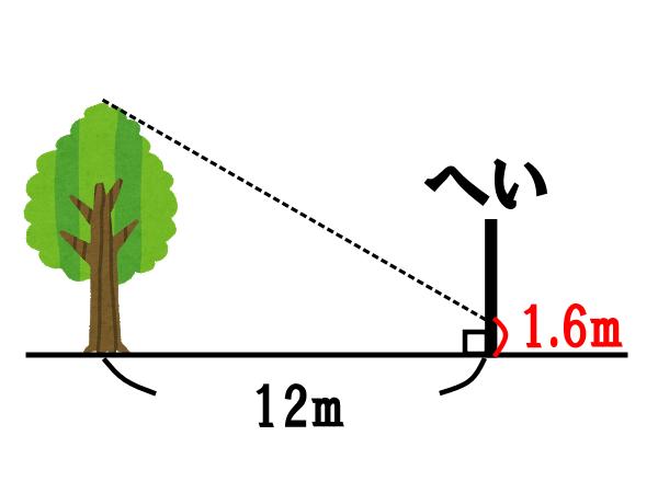 木の高さを求める問題【へいに映る影の長さから求めよう】
